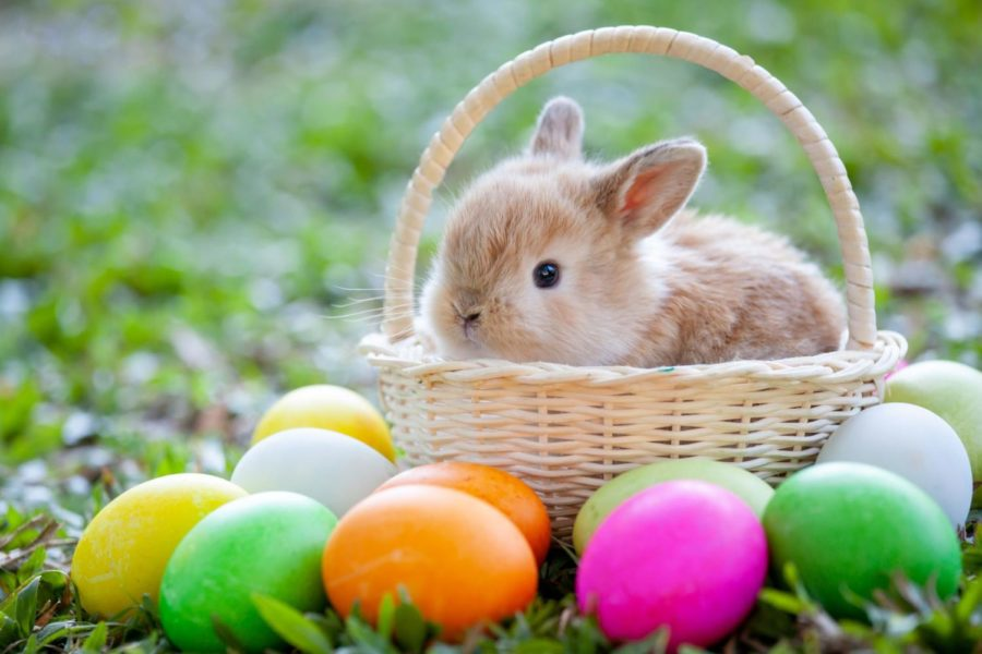The Origins of Eggs and Bunnies on Easter